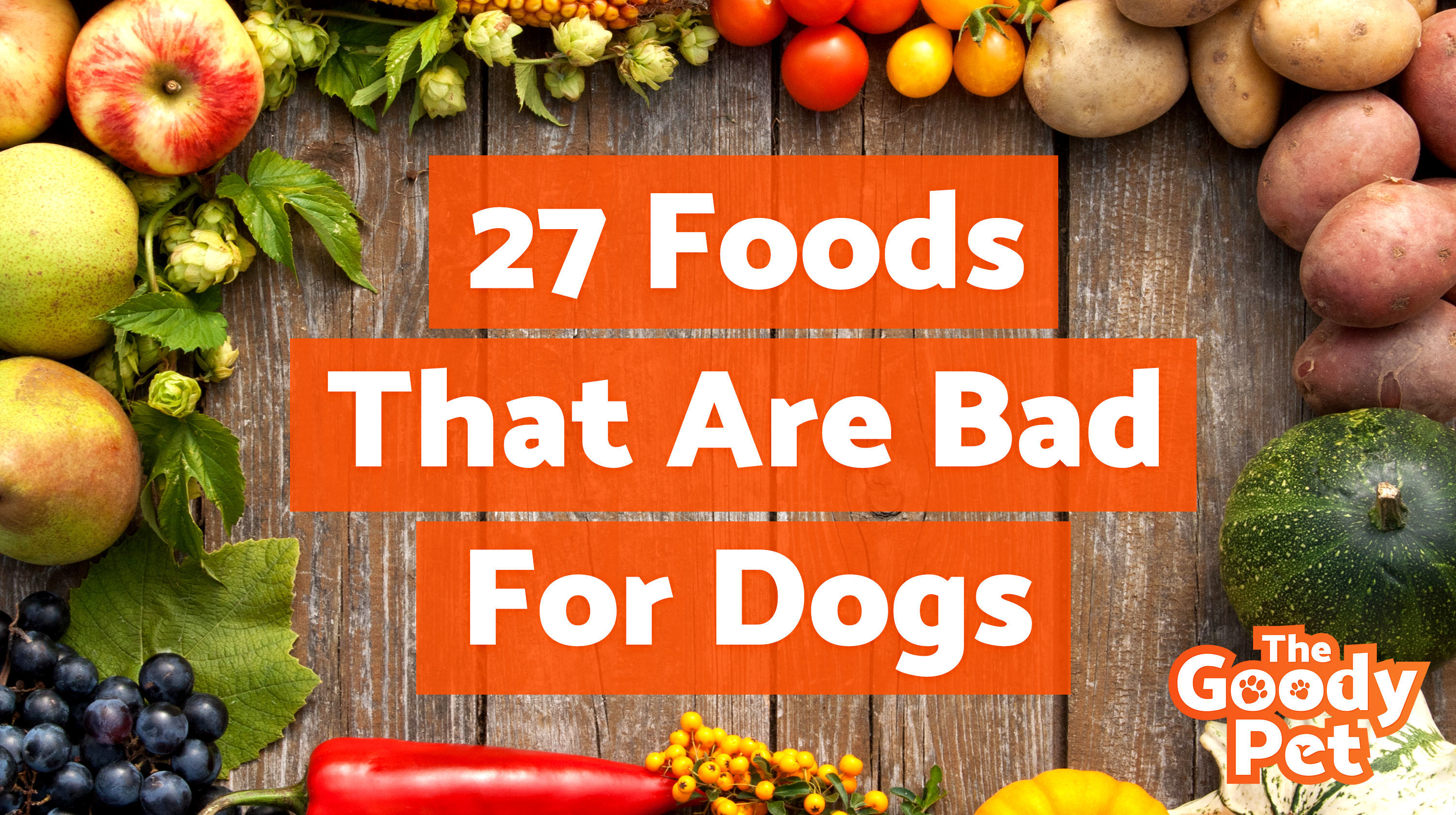 The 27 Worst Foods That Are Bad For Dogs Sunshine Bernese