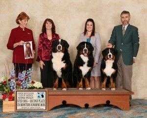 93-5731 Stud Dog 2nd Classique Photography small[1]-3