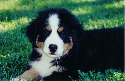 puppyhead
