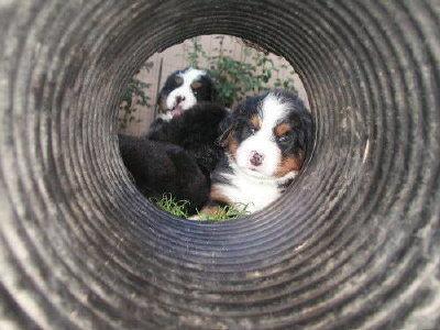 puppytunnel